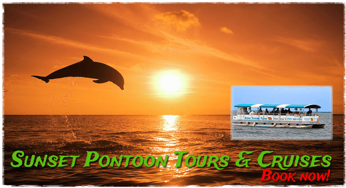 Sunset Pontoon Tours and Cruises Gill Dawg Miss Daisy Port Richey Florida